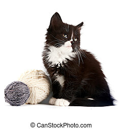 Black-and-white kitten with a woolen balls