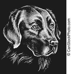 Black and white labrador sketch