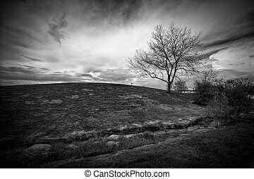 Black and White Landscape of Hill and Leafless Tree