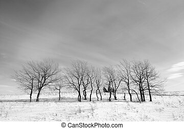 Black and white landscape trees in winter