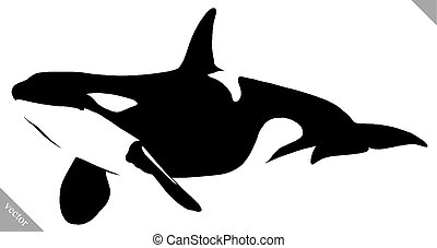 black and white linear paint draw killer whale illustration