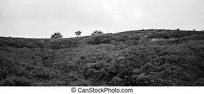 Black and white mountain landscape