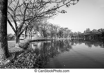 black and white of lake in the garden
