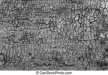 Black and white old wooden texture background