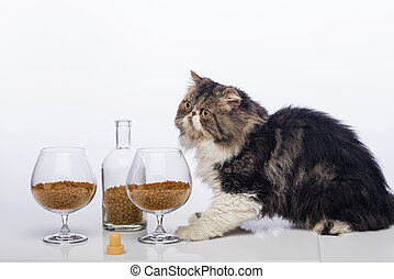 Black-and-white Persian cat, bottle cognac and two glass...