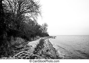 Black and white photo of a coast in the fall