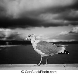 gull bird on the background of the sea and sky