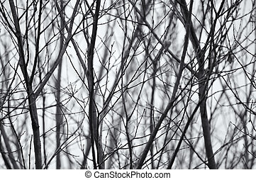 Black and white photo of bare trees branches