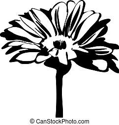 daisy flower on the stalk - black and white picture of...