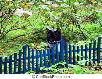 black and white predator cat