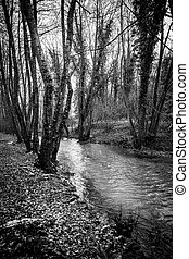 Black and white river