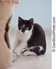 Black and white scared kitten