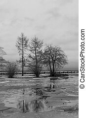 Black and white scene of trees on spring cloudy day on lake embankment
