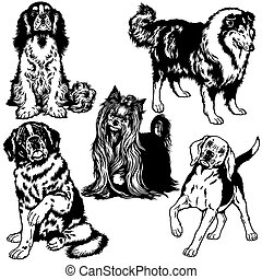 set with dogs of difference breeds, black and white isolated images