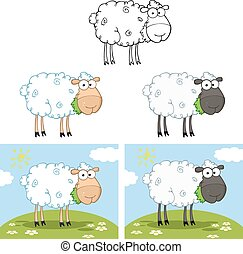 Black And White Sheep. Collection