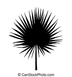 Black and White silhouette of leaf Libistones of Chinese, Southern palm. Vector Illustration.