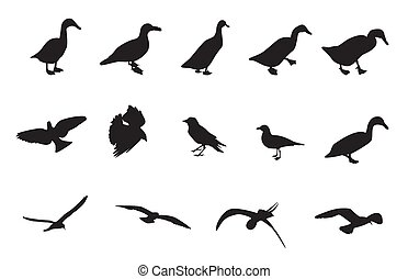Black and White Silhouettes of various birds. Vector Illustration