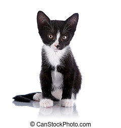 Black and white small kitten sits - Black and white kitten. ...