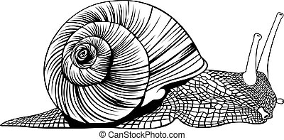black and white snail on the white background