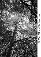 Black and white trees, forest background