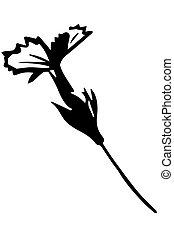 vector sketch wild wild flower on a thin stalk