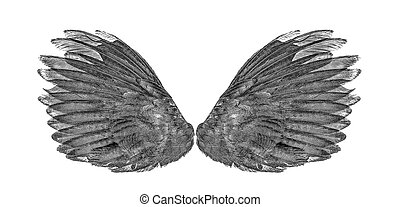 black Angel wings an isolated on background