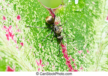 black ant in green nature or in the garden