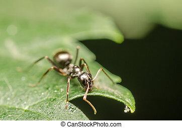 Black Ant Macro Close Up Details Photo