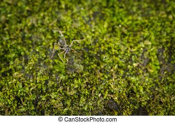 Black ant - Macro of black ant