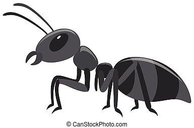 Black ant on white background