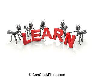 Learn Team-concept