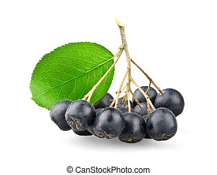 Black aronia with leaf isolated on white background