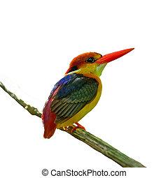 Black-backed Kingfisher - Multicolored Kingfisher bird,...