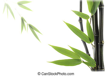 Black Bamboo leaves and stalks