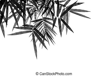 Black bamboo leaves on a white background