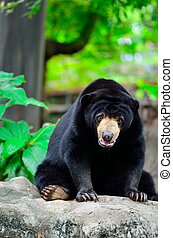 Black bear in wilderness