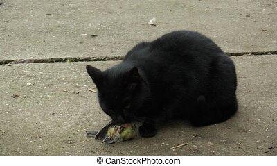 Black beautiful home cat Felis caught a great tit bird Parus...