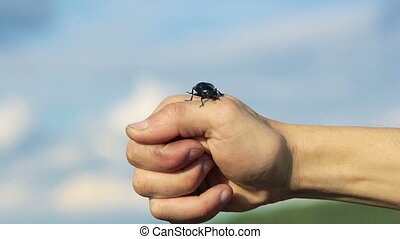 Black beetle crawling on hands on sky background. Slowly