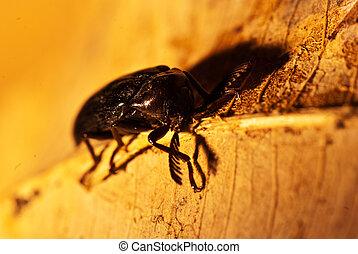 black beetle on a leaf