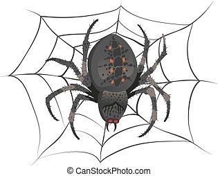 Black big scary spider