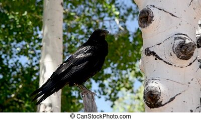 Black bird in the forest near a tree.