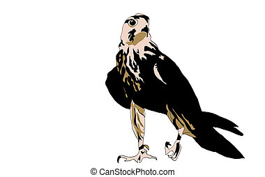 Black bird predator aggressive hawk on background blue sun