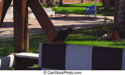 Black bird takes up flapping wings in slow motion - Black...