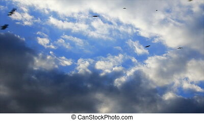Black birds flock on the stratocumulus clouds sky background