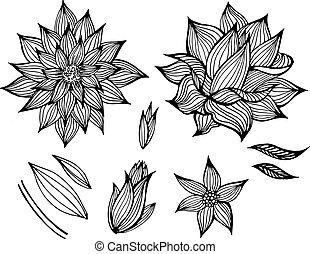 black , bloemen, vector, set
