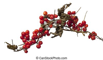 Cut-out Black Bryony berries on white background.