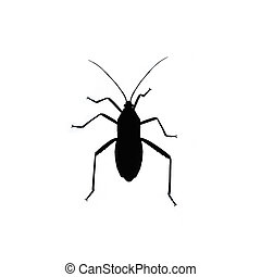 Black bug isolated on white background. Insect silhouette