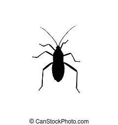 Black bug isolated on white background