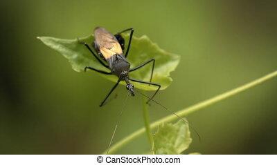 Black bug on a plant