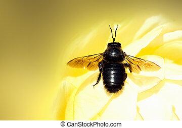 black bug on yellow background
